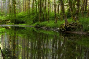 Worst Waterborne Diseases in the United States