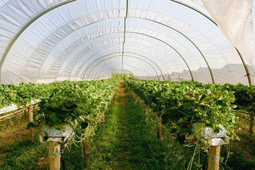 homemade greenhouses are a great way to grow food in a shtf