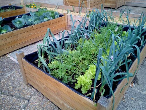 Urban gardening is a skill most preppers should get familiar with