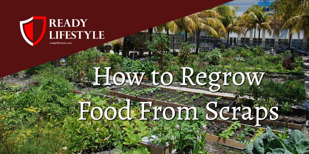 How to Regrow Food From Scraps 39 Foods that you can keep growing