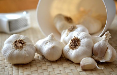 Regrowing garlic from scraps