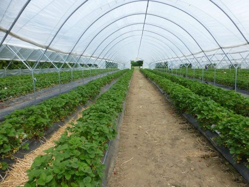 Greenhouse Growing Month by Month - A Complete Greenhouse Growing Schedule