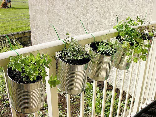 Urban Gardening Container Ideas start with things as simple as cans!