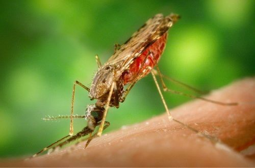 Mosquitos can spread disease