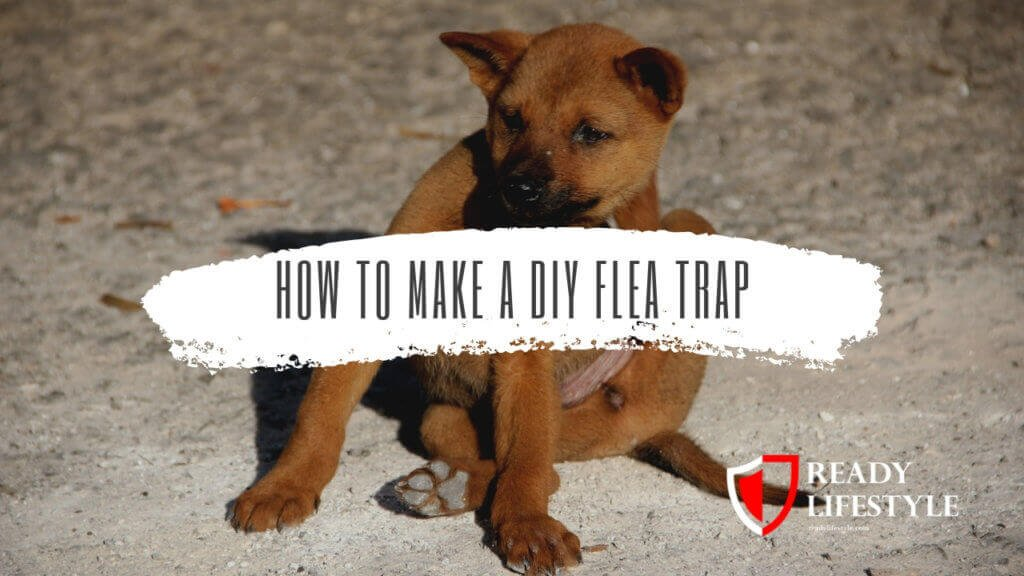 DIY Flea Trap