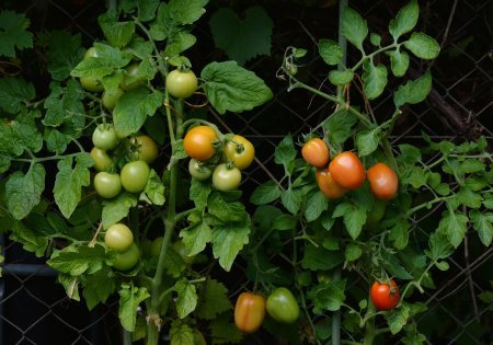 How Much Money Can You Save Growing Your Own Vegetables