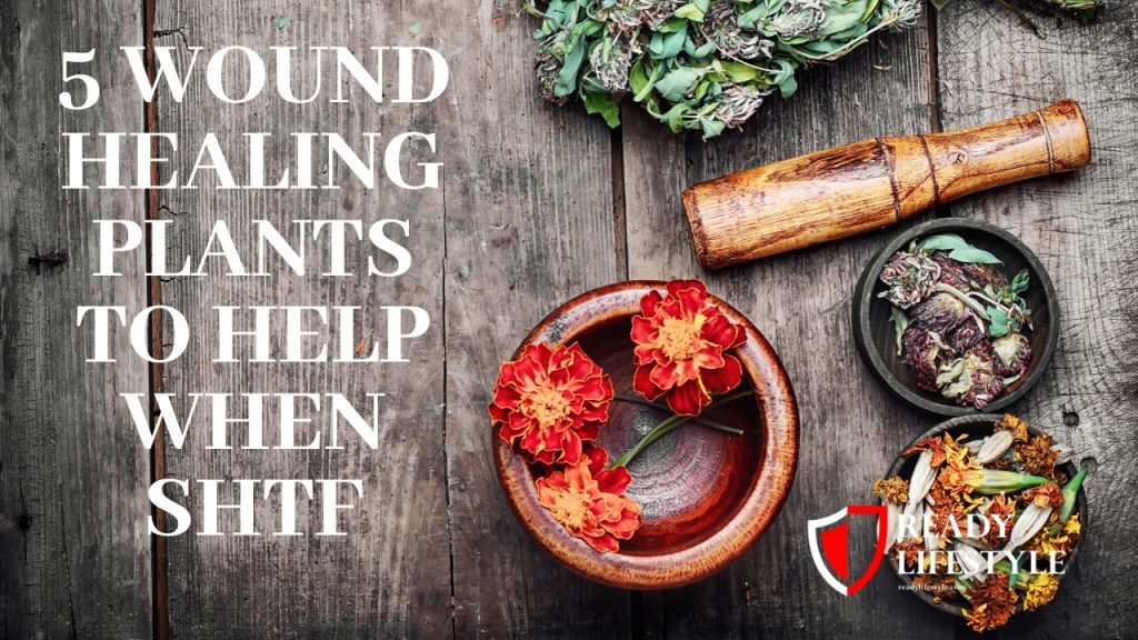 5 Wound Healing Plants to Help When SHTF