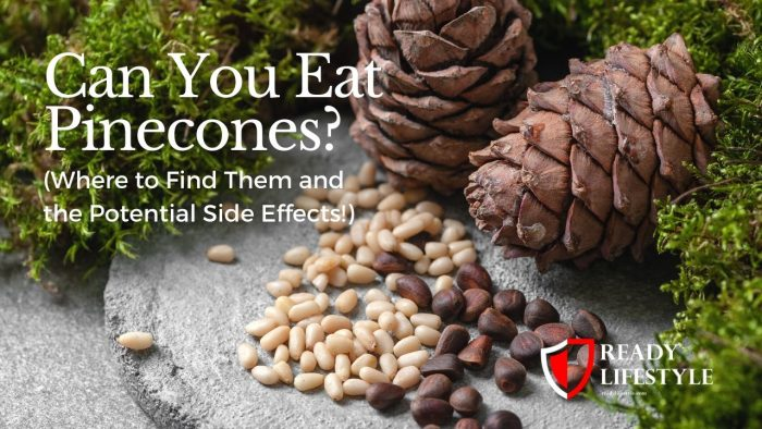 Can You Eat Pinecones
